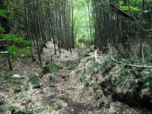 6 竹の葉の下り道