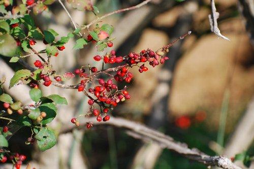 梅の 鶴見川の