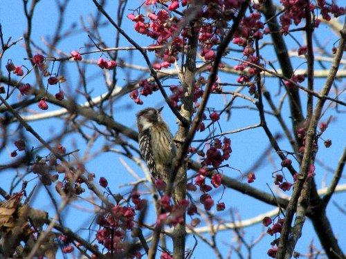 4 景信山で 鳥さん