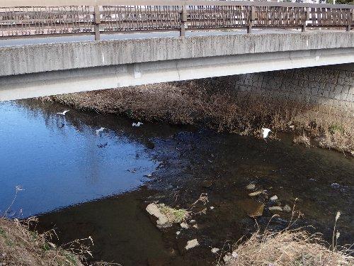 120318 コサギ橋の下