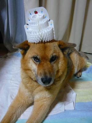 帽子と違うから!