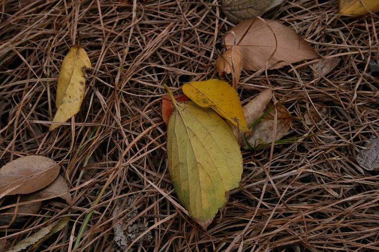 2006-11-23-0023.jpg