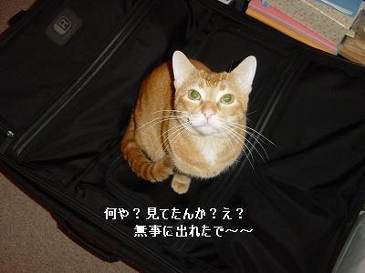 20061231160946.jpg