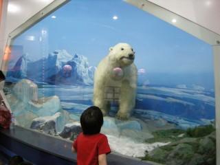 白クマをぼーっと見つめる男