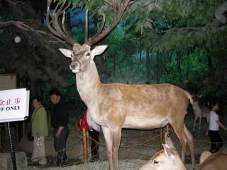 鹿、、、何鹿なのかは知りません