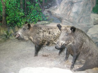 これは猪?