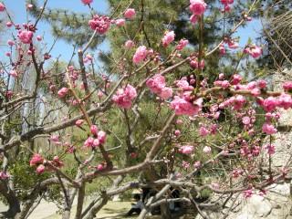 春だよねぇ、、、
