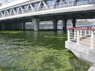何が潜んでるのかわかならいほどの微妙な河の色