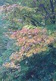 s-NEC_0042.jpg