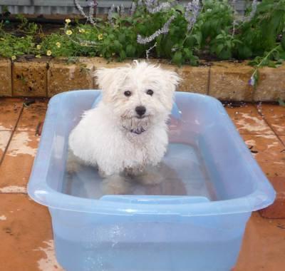 プリン 水浴び中