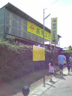 桜井ブドウ園