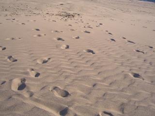 鳥取砂丘 砂漠
