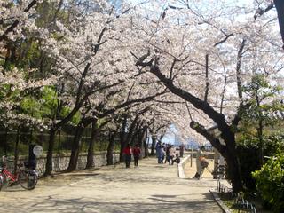 大阪城内 桜