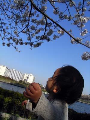 桜とかりんちゃん