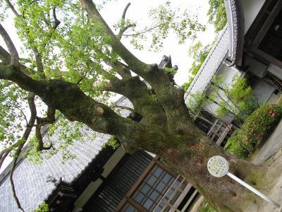 0906syorakuji008.jpg