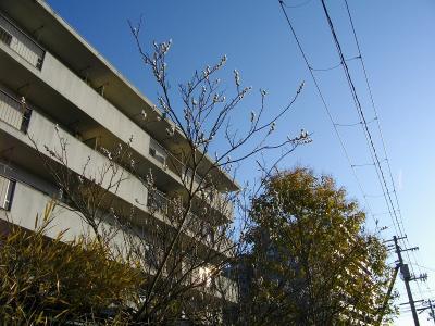 09nekoyanagi01.jpg