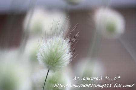 IMG_0819_20080607222108.jpg
