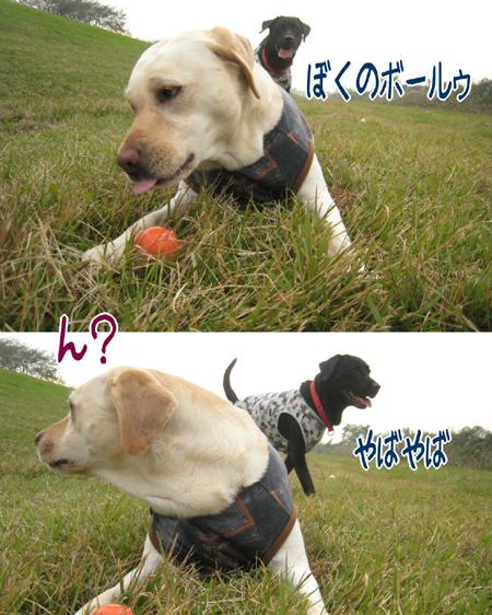 20081103_7.jpg