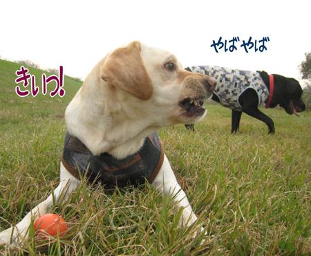 20081103_8.jpg