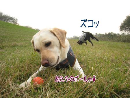 20081103_91.jpg