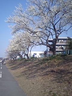 20080308梅