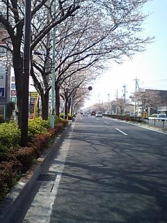 20080326府中街道
