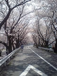 20080404相模川