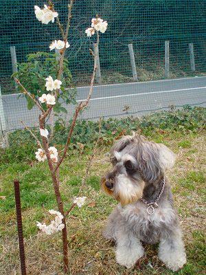 一人お花見のレノさん。