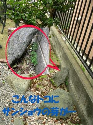 hatugasanshou.jpg