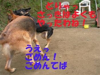 sereaji3.jpg