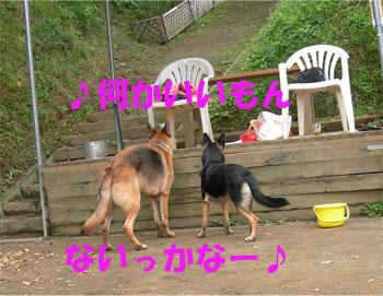 sereaji4.jpg