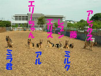 shugou1.jpg