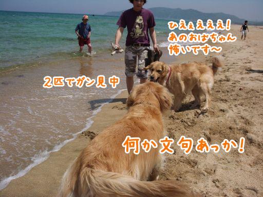 IMGP6995_512.jpg