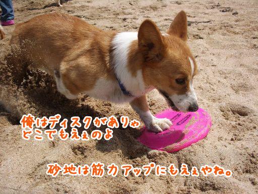 IMGP7002_512.jpg