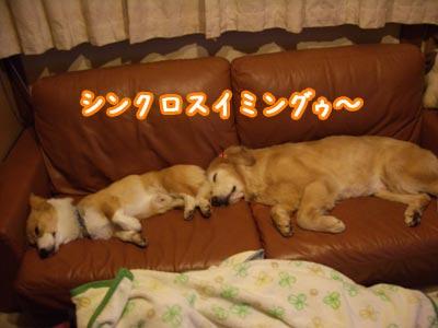 shinkuro.jpg