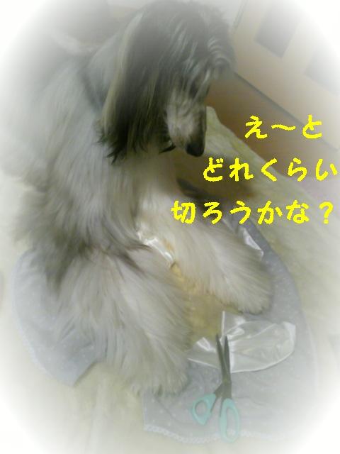 20090831081555
