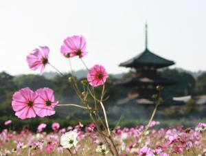 発起寺の三重塔