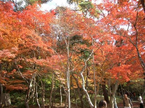 日暮らしの庭の紅葉