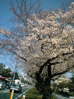 09-03-26_12-28.jpg