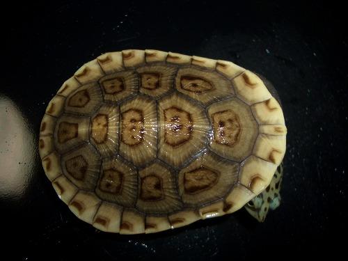 パーカーナガクビa