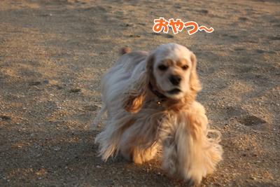 001_20111121213142.jpg