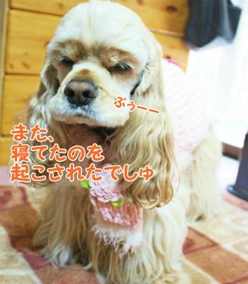001_20120130214103.jpg