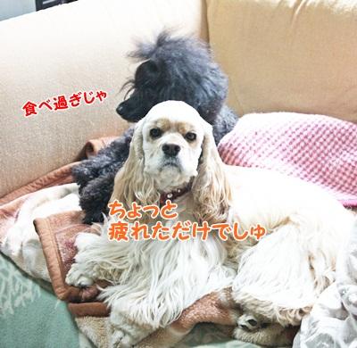 002_20111215230301.jpg