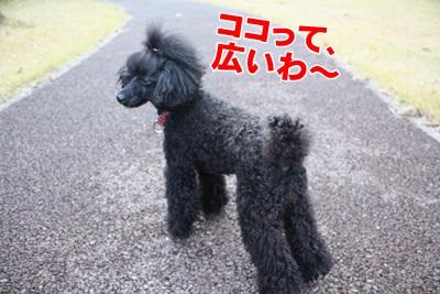 004_20111204213941.jpg