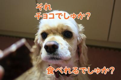 004_20120210214922.jpg