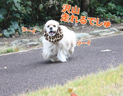 005_20111204213940.jpg