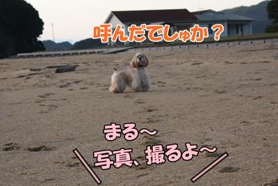 007_20111121213247.jpg
