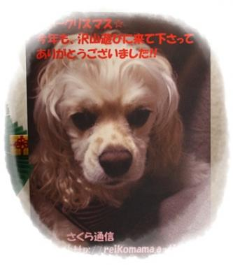 007_20111204114439.jpg