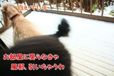 007_20120205172125.jpg