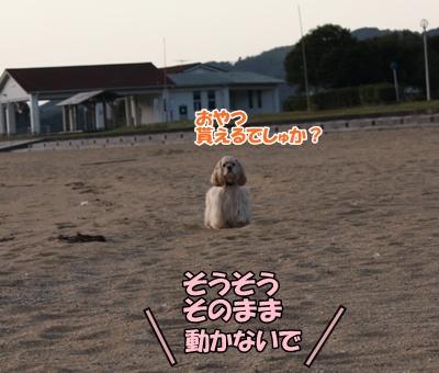 008_20111121213247.jpg